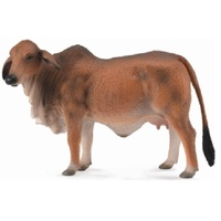 BRAHMAN COW RED (L)