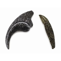 ALLOSAURUS - TOOTH & FINGER CLAW (WDB)